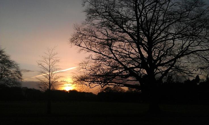 A wintery sunset, Phoenix park Dublin
