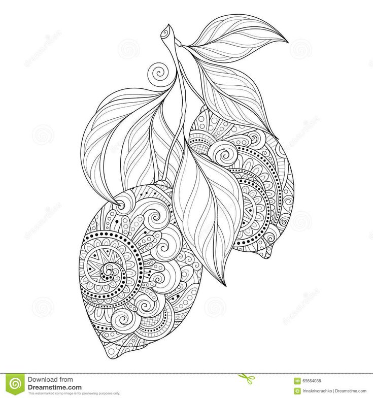 Vector Monochrome Contour Branch With Ornate Lemons Stock Vector Image 69664088 Mandala Coloring Pages Coloring Pages Mandala Coloring