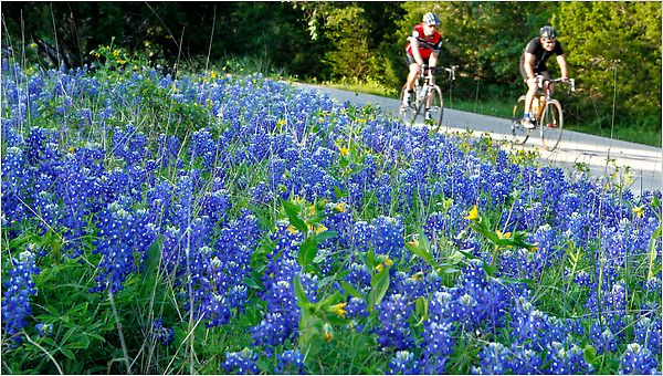 Bluebonnets - can you even glance at this and not smile? Not me!