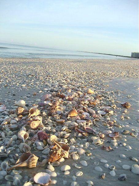 Shelling in Marco Island!  Nothing Like It