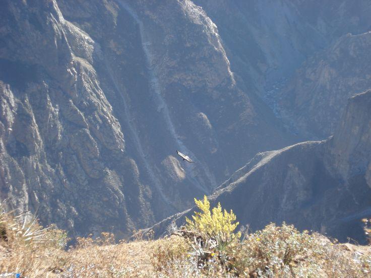 Vuelo del Cóndor, Perú