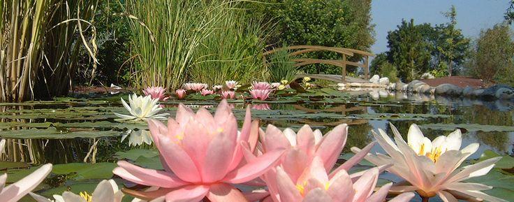 Laissez-vous griser par les couleurs des lotus et nénuphars.