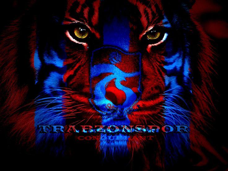 Anatolian Tiger :-)) | TRABZON FC | Pinterest