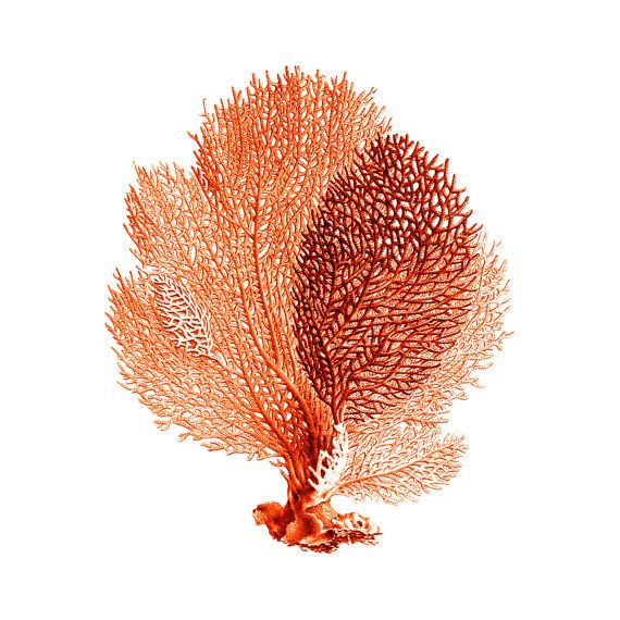 Sea Fan Coral Red Orange Nautical Vintage Style Art Print Beach House Decor on Etsy, $11.00