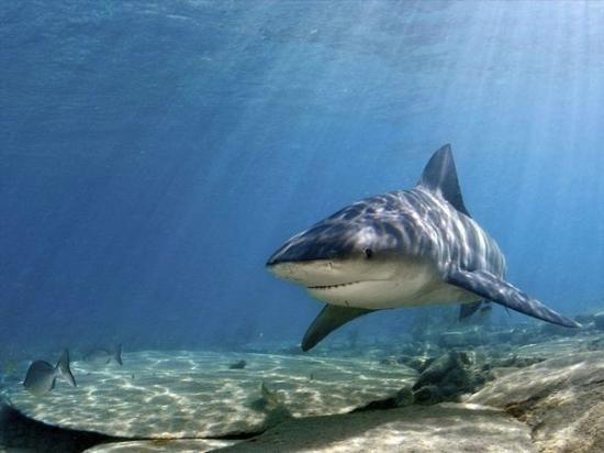 Fotos de Playas del Coco - Imágenes destacadas de Playas del Coco, Provincia de Guanacaste - Bull Shark (IRM_12, may 2012)TripAdvisor