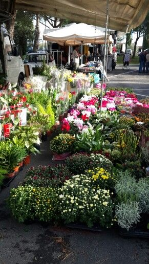 Market at montespertoli