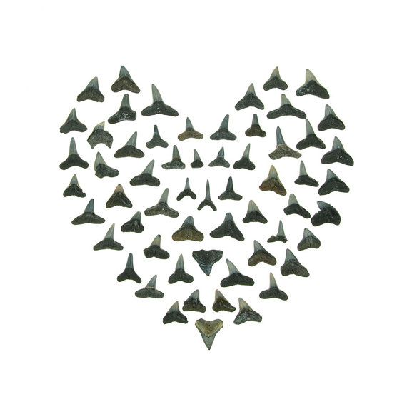 Toying with creating this with the collection of shark teeth the Mr. and I have from childhood vacations. Shark Tooth Valentine print by QuercusDesign on Etsy.