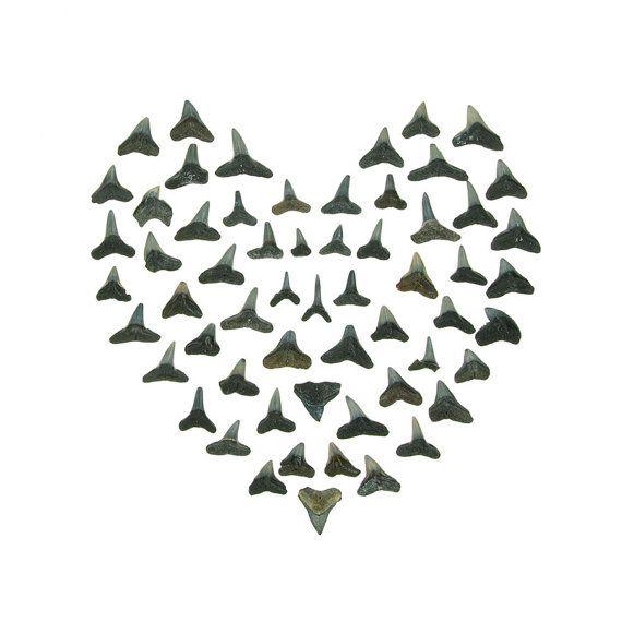 Shark Tooth Heart 8 x 8 beachcombing valentine door QuercusDesign
