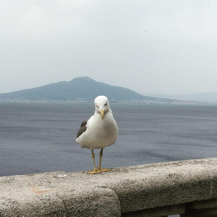 Mount Vesuvius from Sorrento http://www.sorrentolimousineservice.com/en/