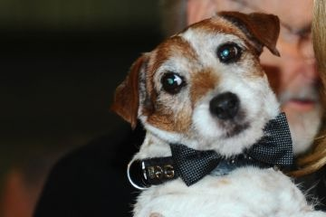 Uggie wins my vote for an Oscar.