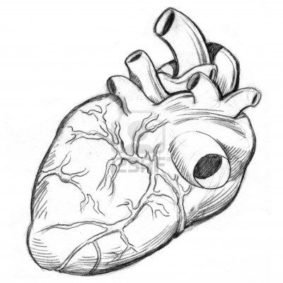 25+ best ideas about realistic heart drawing on pinterest | dibujo, Muscles