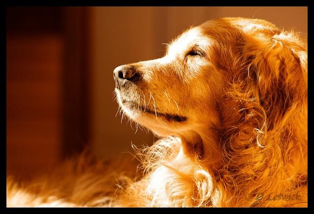 Dog Breed F
