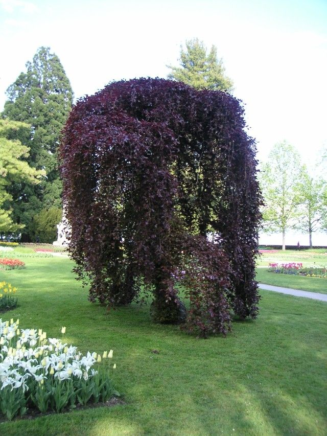 164 best images about jardineria flores y frutos for Weeping garden trees