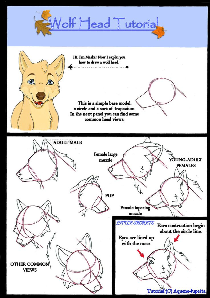 122 best wolf images on pinterest draw sketches and wolf drawings ccuart Gallery