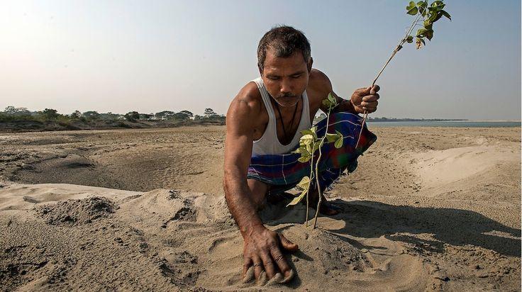 Индиец Джадав Пайенг (Jadav Payeng), вырастил целый лесв штате Ассам. Живет в хижине, сделал сам, бесплатно.