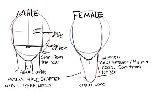 Male/Female Face Structure