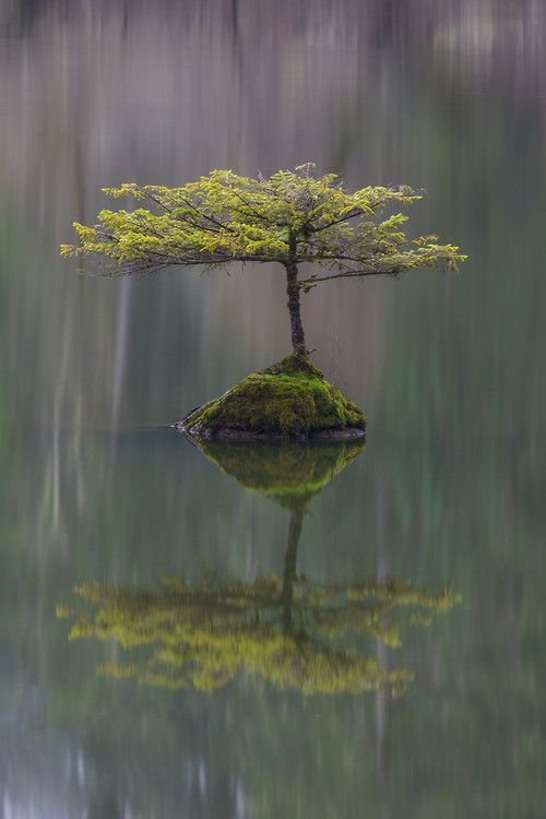 ~~Waiting For a Friend ~ lone Bonsai tree, Fairly Lake near Port Renfrew on Vancouver Island, British Columbia, Canada by Carrie Cole~~
