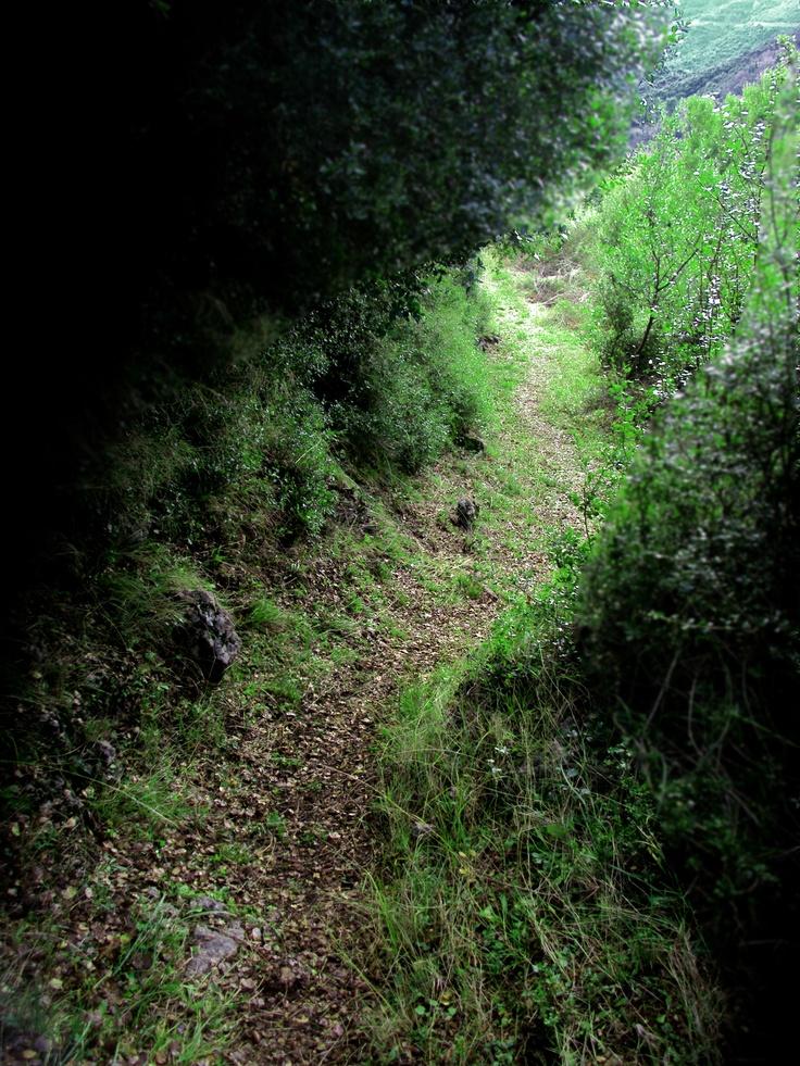 Arcadian Path