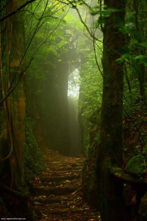 A beautiful cloud forest only a 15-minute drive from Granada city. Find out which volcano this enchanted scene comes from at VagrantsOfTheWorld.com