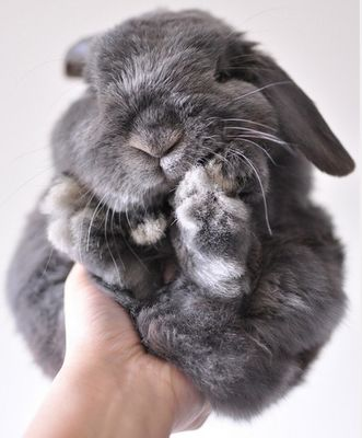 Squishy bun.: Rabbit, Fluffy Bunnies, Snuggles, Ball, Pet, Easter Bunnies, Baby Bunnies, Things, Animal
