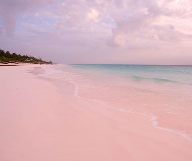 Pink Sands Beach, Harbour Island, Bahama beautiful rosy pink sand comes from the pure white sand mixed with the red shell from foraminifera (a single-celled marine animal) (a singe-celled marine animal)