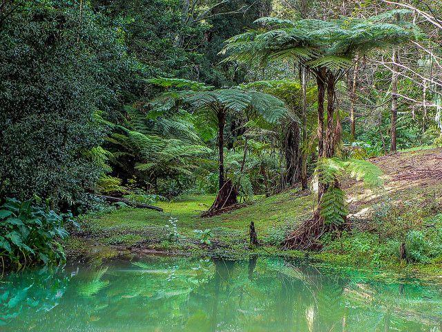 Pond at Berry NSW Australia