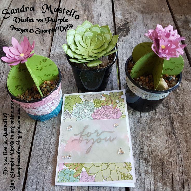 Oh So Succulent : Stampin' Up! : Sandra Mastello : Violet vs Purple