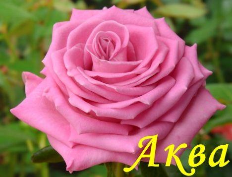 Аква - Зеленый сад