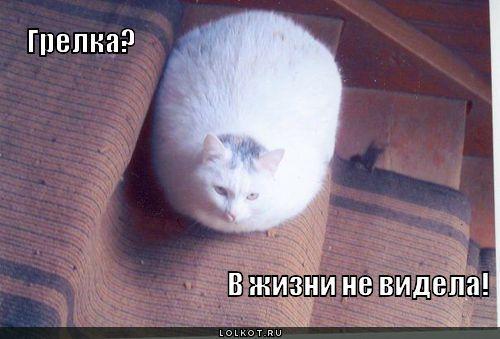 Только любители кошек знают, что такое всегда теплая, роскошная, меховая грелка. ♨️ Сюзанн Миллен