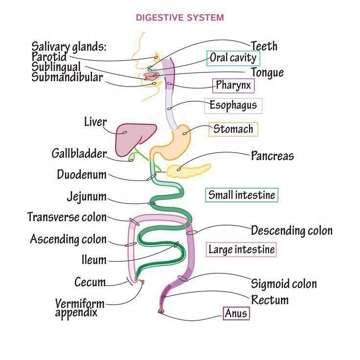 Lpn Jobs Near Me NursingSchoolsNearMe Basic anatomy and