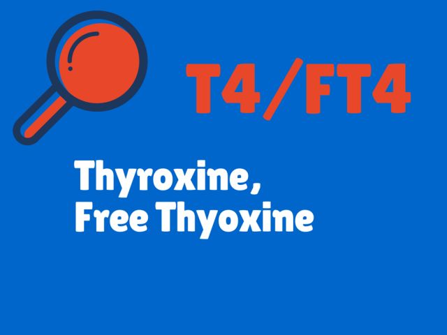 What Do Your Thyroid Blood Test Results Mean?: T4/FT4  - Thyroxine / Free Thyroxine - Thyroid Tests