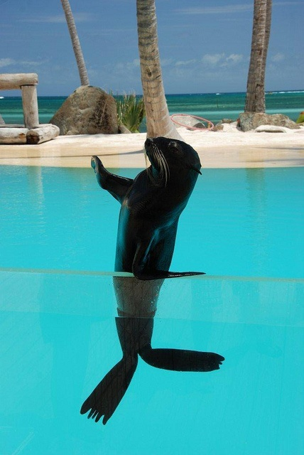 Dolphin Explorer Excursion in Punta Cana ! Cant wait to meet this little guy ! <3 #dominicanrepublic #puntacana #airbnb