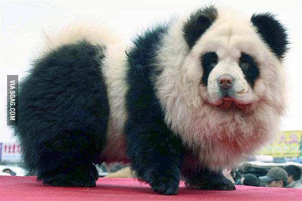 Park Chow Dog Friendly