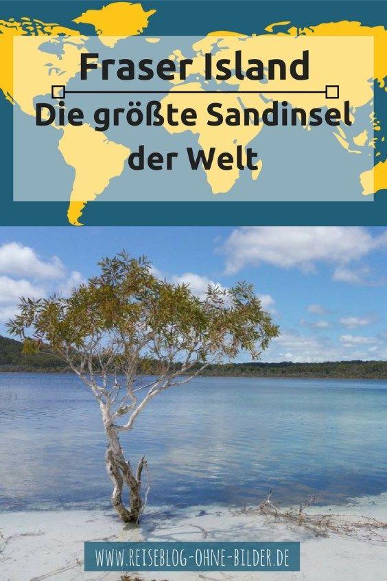 Fraser Island ist die größte Sandinsel der Welt. Hier siehst du wildlebende Dingos, Schlangen, Warane, Wildpferde, Opossums, Wallabies, unzählige Vögel und Regenwald. Du darfst auch keinesfalls das Wrack der SS Maheno und den Indian Head auslassen.