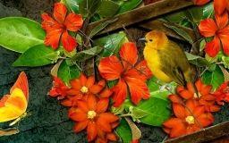 Flores de color naranja brillante con el pájaro y la mariposa fondos de pantalla