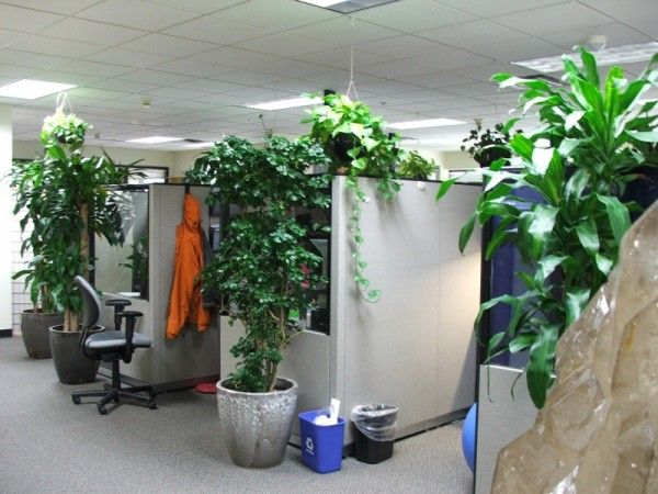 17 best images about indoor on pinterest office plants container plants and tall planters - Tall office plants ...