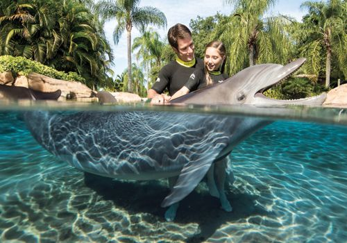 Packages & Pricing at Discovery Cove Orlando
