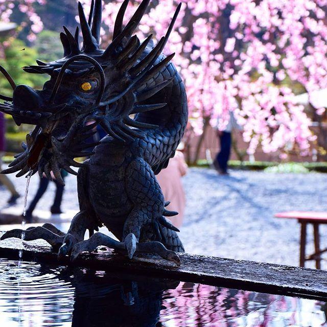 Wish you all a pleasant Sunday 🇯🇵 Spring is slowly coming to Japan too 🌸🐲 // Mindenkinek nagy kellemes vasárnapot kívánunk! 🇯🇵 A tavasz lassan Japánba is megérkezik 🌸🐲 #szegedbudokan #martialarts #academy #szeged #budokan #japan #japanese #water #fountain #kyoto #dragon #holy #spirit #blessed #samurai #culture #travel #trip #budo #memory #tbt #shinto #shrine #garden #zen #mediation #ryu #blessing #misogi #spiritual