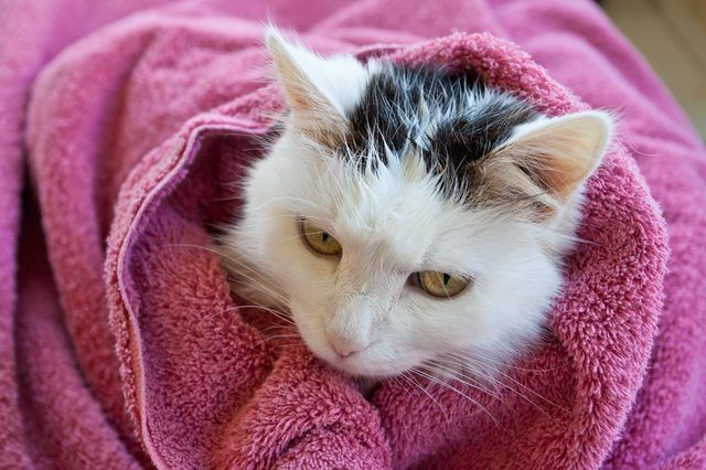It is in a cat's nature to try to stay clean; cats spend many of their waking hours grooming themselves. In some cases, a cat may get an oily or sticky substance on her coat that she can't groom out herself, and she may need a bath. Making homemade dry or wet shampoo with natural products is an expensive method to help groom your feline friend.