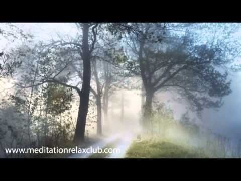 Rainforest Music - Soothing Lullabies for Relaxation, Relaxing Sounds of...