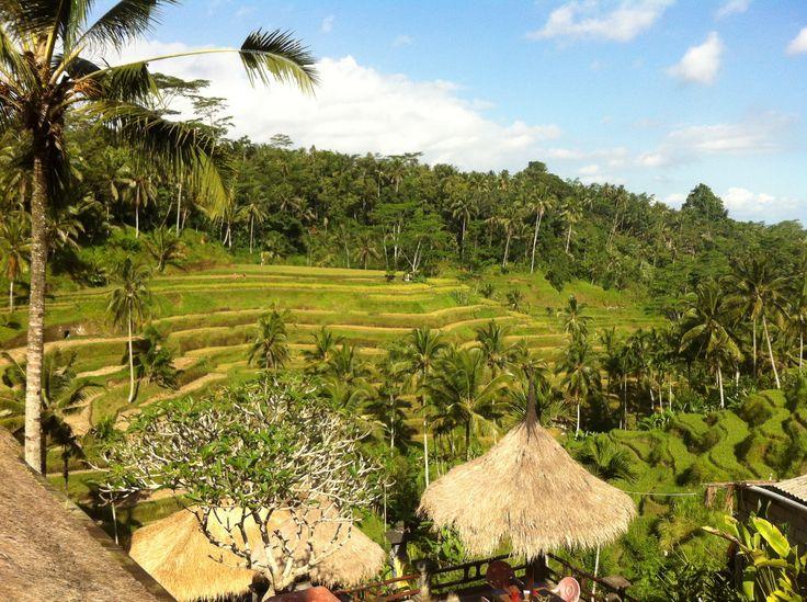 Tegal Lalang rice terrace. http://www.balisurfwaves.com/