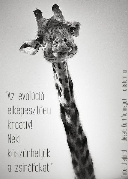 Kurt Vonnegut vicces gondolata az evolúcióról.