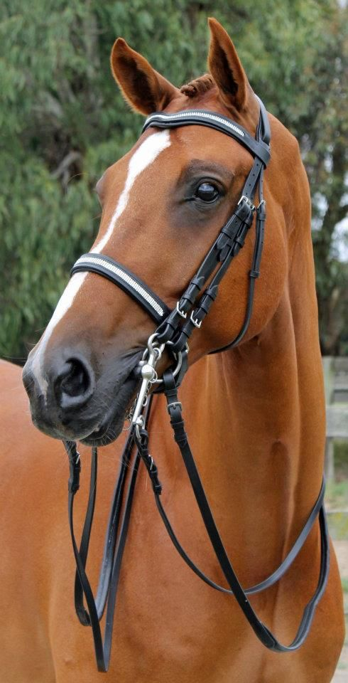 Handsome chestnut gelding ...........click here to find out more http://googydog.com