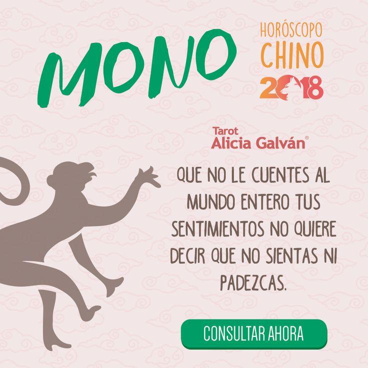 ¿Quieres saber qué te deparará el año nuevo chino? Descúbrelo aqui 👇🐶 #mono #monkey #horóscopo #añodelperro