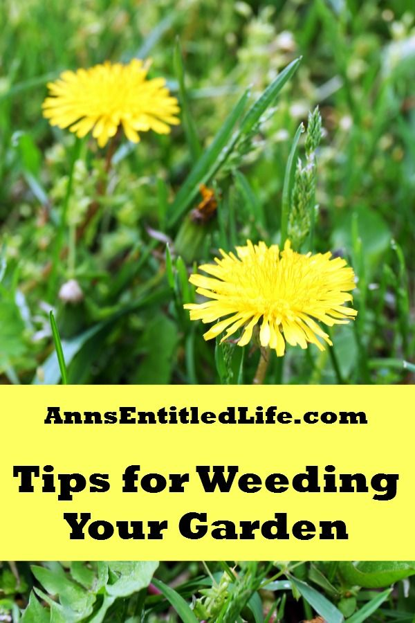 Tips For Weeding Your Garden - It's that time of year: summer and gardening season is in full swing. And with it, comes the weeds. And more weeds. And more weeds. Regardless of how diligent at preventative weed measures, if you have a garden, you will have weeds. http://www.annsentitledlife.com/how-does-your-garden-grow/tips-for-weeding-your-garden/
