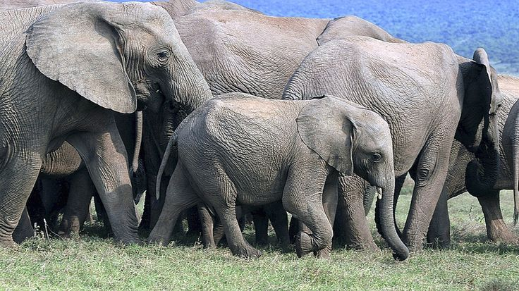 Elephant Family - Addo Park in South Africa