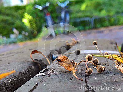 A closeup shot of fallen leaves on a wooden bench