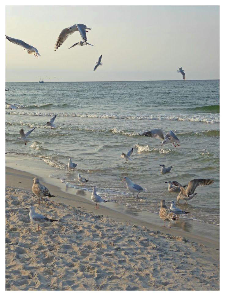 birds_Baltic Sea_Ustka_Poland