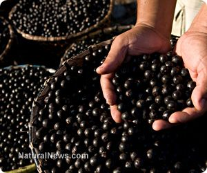 ARONIA BERRIES: NORTH AMERICAN FRUITS BURSTING WITH ANTIOXIDANTS. Aronia is a North American shrub that bears fruits which resemble dark purple-colored cranberries. Despite their ordinary appearance, however, these fruits--which are commonly called aronia berries or chokeberries--boast an unusually impressive nutritional profile.