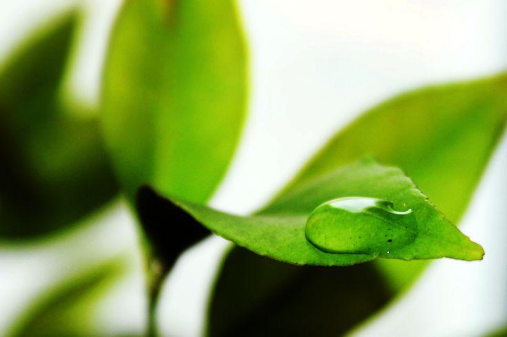 Fifty Shades of Green   Flickr - Photo Sharing!